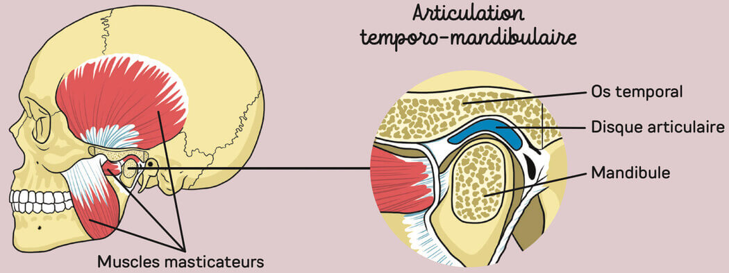 Machoire osteopathe